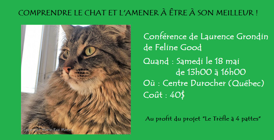 bannière_conference_comprendre le chat