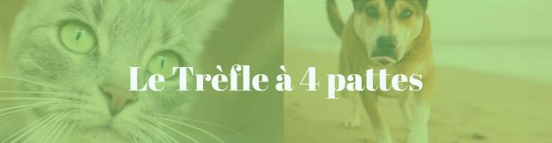 cropped-copie-de-infolettre-3.png